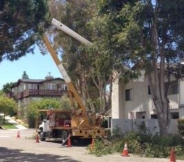City Wide Tree Removal
