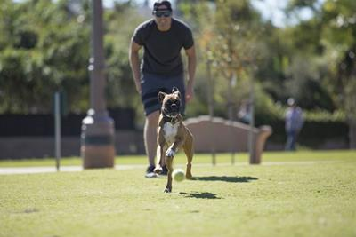 Dog Park closed for annual spring maintenance May 1 - May 31