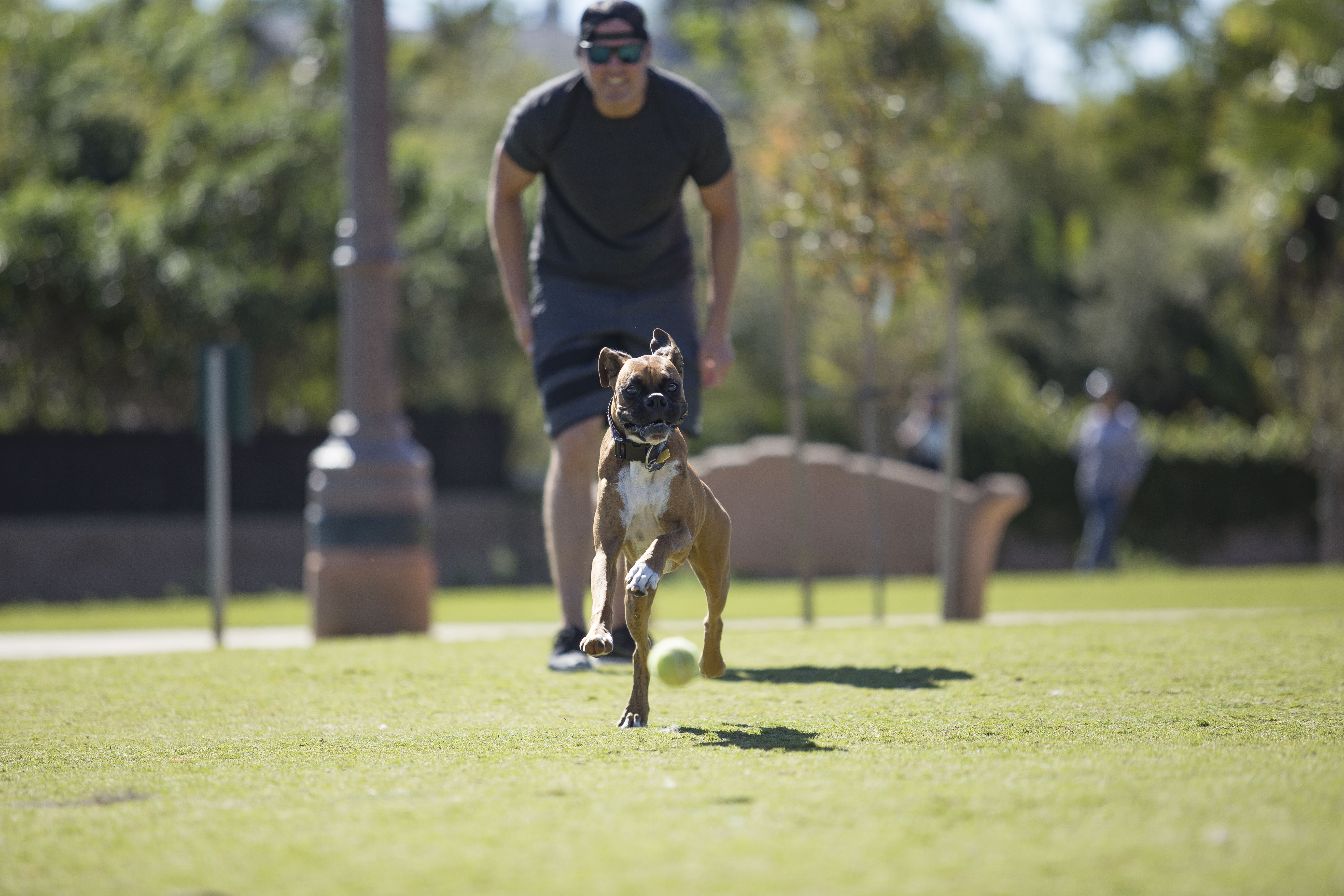 Dog Park closed for maintenance and improvements October 2 to October 30
